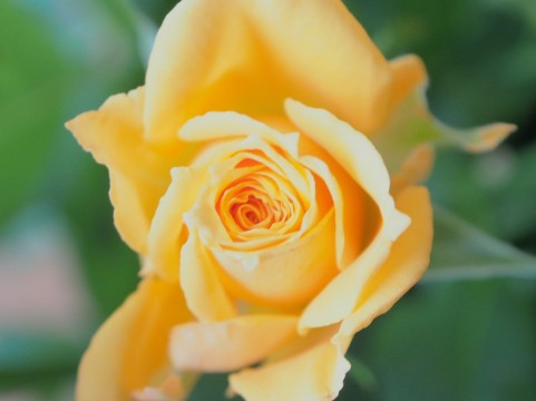 【Vol.309】人間の花は何年後に咲くのか。