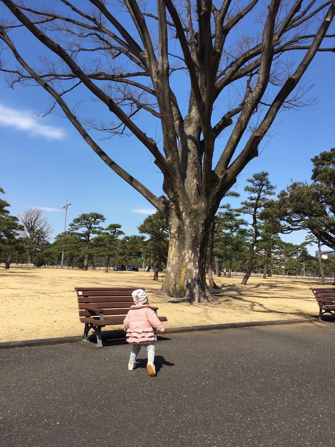 森を見てから木を見よう。